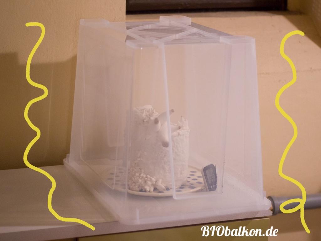 Pilzkultur im Gewächshaus